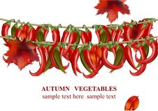 Autumn vegetable chili peppers realistic background Vector illustration. S Royalty Free Stock Image
