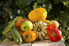Autumn vegetable and fruits collection Stock Photography