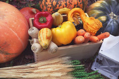 Autumn vegetable harvest Royalty Free Stock Photography