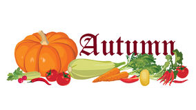Autumn vegetable and leaves background Royalty Free Stock Image