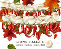 Autumn vegetable Mushroom and chilli peppers realistic background Vector illustration. Autumn vegetable Mushroom and chilli peppers background Vector Royalty Free Stock Image
