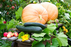 Autumn vegetable Royalty Free Stock Image