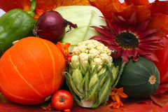 the autumn vegetables Royalty Free Stock Photography