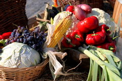 Autumn vegetables. Autumn seasonal vegetables exposed outdoor Royalty Free Stock Photos