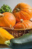 Autumn vegetables. Orange pumpkins and marrows in the table royalty free stock photos