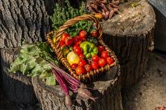 Autumn Vegetables Lizenzfreie Stockbilder