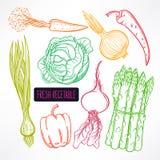 Autumn Vegetables Photo stock