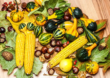 Autumn vegetables Stock Photos