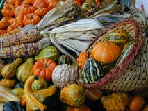 Autumn Vegetables of Color Royalty Free Stock Photo