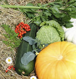 Autumn vegetables Royalty Free Stock Images