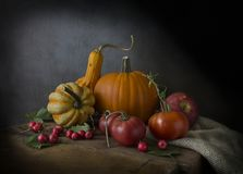 Beautiful ripe pumpkin and tomatoes with apples royalty free stock image
