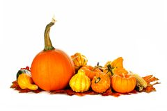 Autumn vegetables. Group of autumn pumpkins and vegetables over white Royalty Free Stock Photo