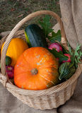 Autumn vegetables. Autumn harvest vegetables in a wicker basket decorated with oak leaves and linen cloth Stock Photos