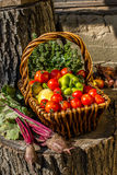 Autumn vegetables Royalty Free Stock Photos