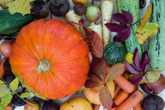 Autumn vegetables and leaves, top view. Assortment of vegetables (pumpkin, marrow, carrot, turnip, onion, apple, parsnip, beetroot) with autumn leaves over white Stock Image