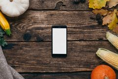 Autumn vegetables: mobile phone with white empty screen, pumpkins and corn with yellow leaves on a wooden background royalty free stock photo