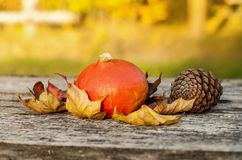 Autumn vegetables Royalty Free Stock Image