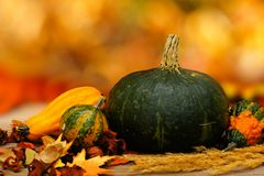 Autumn vegetables Royalty Free Stock Photography