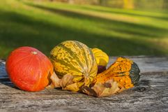 Autumn vegetables. On a wooden table Stock Photo