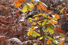 Autumn vegetation in ocher and green tones royalty free stock photography