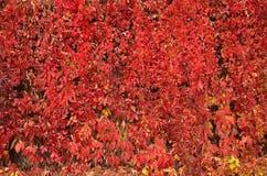 Autumn vegetation Stock Photography
