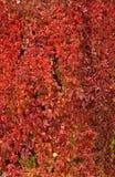 Autumn vegetation Royalty Free Stock Image