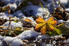 Autumn vegetation. On the tundra in the far north Royalty Free Stock Photography