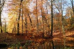 Autumn Veluwe stock afbeeldingen