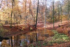 Autumn Veluwe Stock Photos