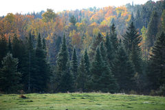Autumn vermont Royalty Free Stock Images
