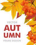 Autumn vertical background with branch of rowan, berries and lea. Ves. Frame fall. Vector illustration Stock Images