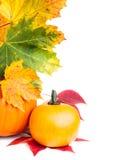 Autumn vertical edge  border Stock Images