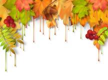 Autumn Vetora Dripping Paint Leaves Foto de Stock Royalty Free