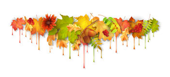 Autumn Vetora Dripping Paint Leaves Fotografia de Stock Royalty Free
