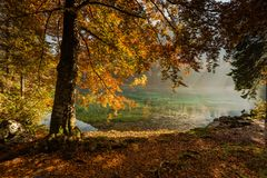 Autumn vibrant colors over alpine lake and forest royalty free stock photo