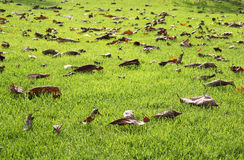 Autumn vibrant green lawn Royalty Free Stock Photography