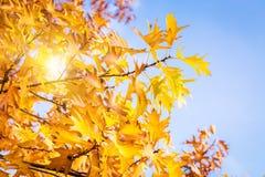 Autumn vibrations Stock Photo