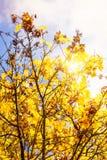 Autumn vibrations Stock Image