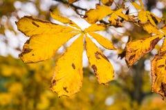 Autumn vibrations Royalty Free Stock Photo