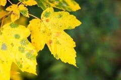 Autumn vibrations Stock Photography