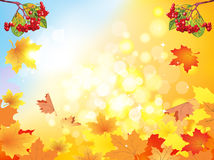 Autumn viburnum Stock Images