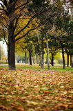 Autumn in Vienna Royalty Free Stock Images