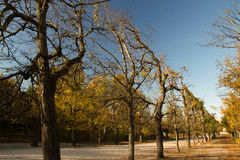 Autumn in Vienna Royalty Free Stock Photos