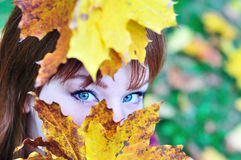 Autumn view Royalty Free Stock Photos