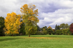 Autumn view. Yellow tree in G Ross Park, Toronto, Ontario Stock Images