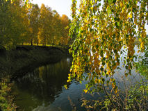Autumn view. Of lake and forest Stock Image