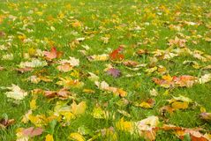 Autumn view. Orange leaves on even green grass. Quiet weather Stock Images