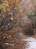 Autumn view. With drops on the branches and steps far away Royalty Free Stock Images