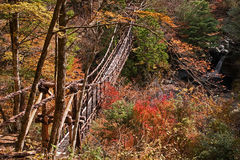 Autumn view of the bridge of lianas stock photography