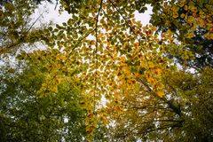 The autumn view through the colorful leaves. stock photo